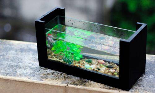 Najbolje akvarijske biljke za početnike