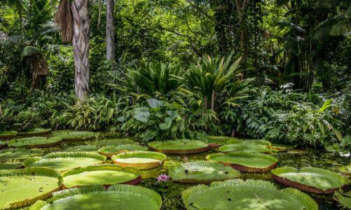 Amazonija u agoniji – umiru li pluća svijeta?